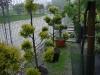 další pohled keříkové nabídky arboreta