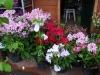vyhrazené místo prodejních květin
